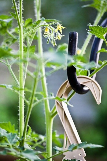 tomato blooms upside down planter upsy downsy