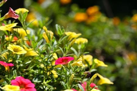 _web-2009-06-27-garden-8