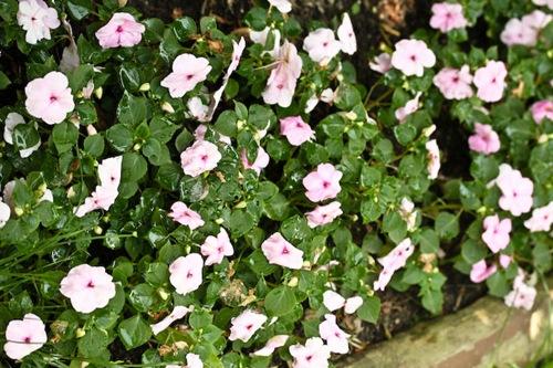 _web-2009-06-27-garden-11
