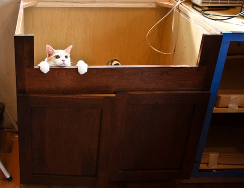 Kitty Cat in the new cabinets