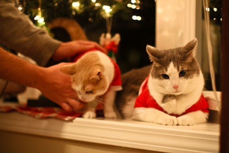 _web-Christmas-Kitties-5