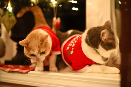 _web-Christmas-Kitties-6