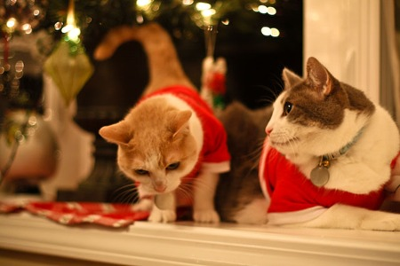_web-Christmas-Kitties-7