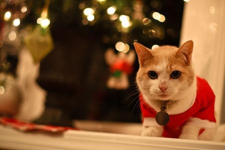_web-Christmas-Kitties-9