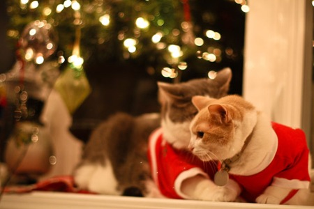 _web-Christmas-Kitties-10