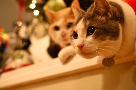 _web-Christmas-Kitties-16