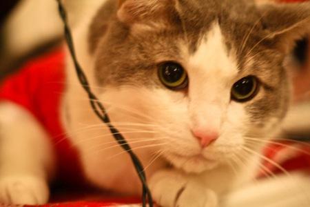 _web-Christmas-Kitties-18
