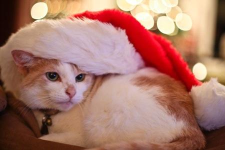 _web-Christmas-Kitties-2