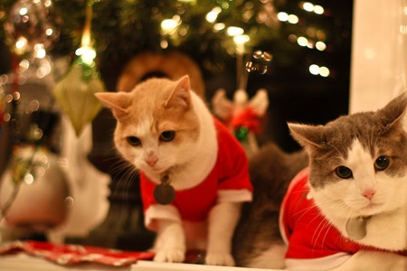 _web-Christmas-Kitties-8