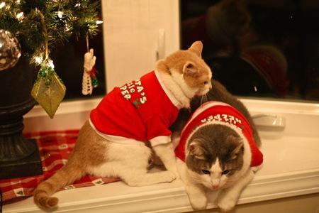 _web-Christmas-Kitties-11
