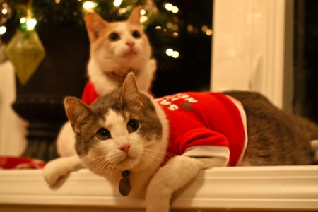 _web-Christmas-Kitties-12