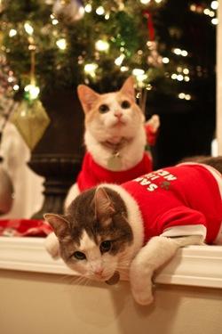 _web-Christmas-Kitties-13