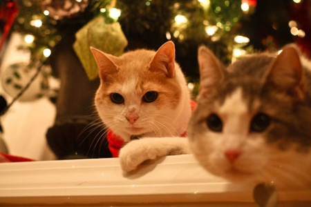 _web-Christmas-Kitties-15
