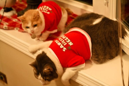 _web-Christmas-Kitties-17