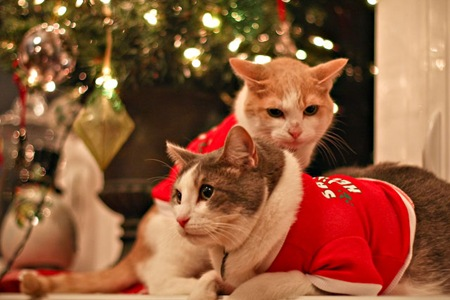 _web-Christmas-Kitties-19