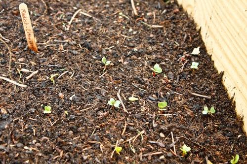_web-2010-04-gardening-14