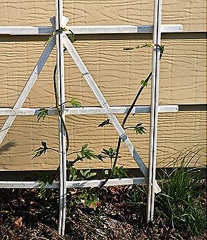 _web-2010-04-gardening-17