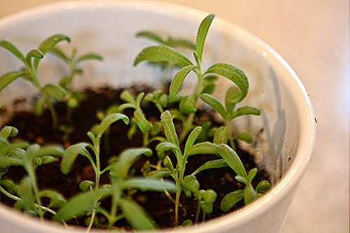 _web-2010-04-gardening-19
