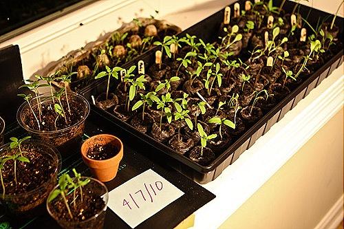 _web-2010-04-gardening-12
