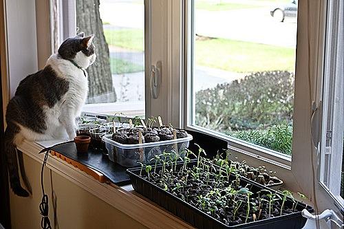 _web-2010-04-gardening-20