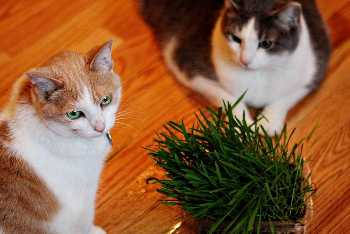 _web-2011-03-18-Seedlings-022-2