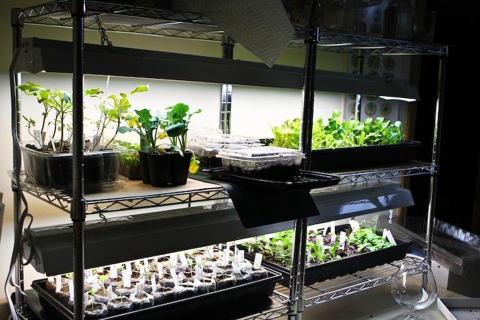 2011-03-30-SaladBox-13