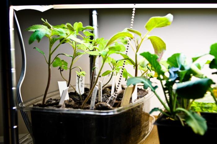 2011-03-30-SaladBox-14