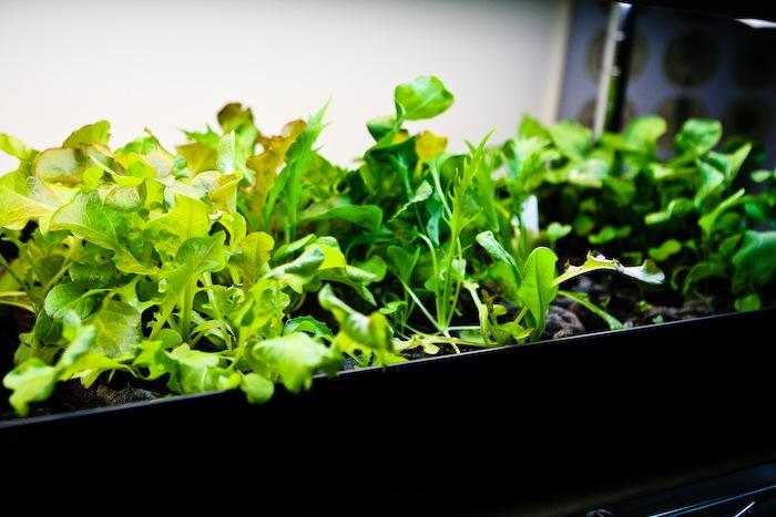 2011-03-30-SaladBox-15