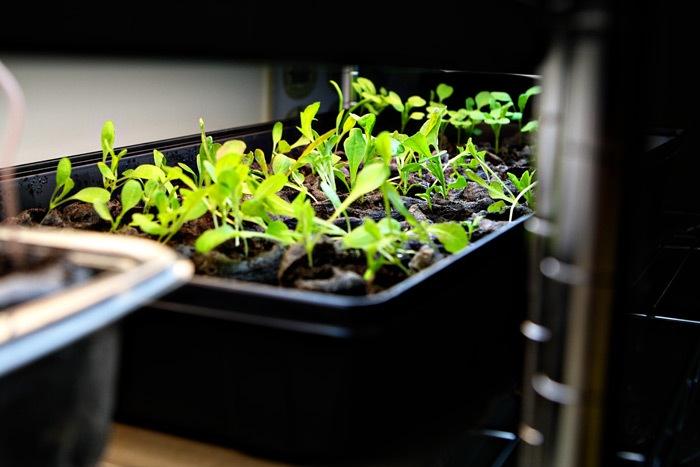 _web-2011-03-18-Seedlings-029