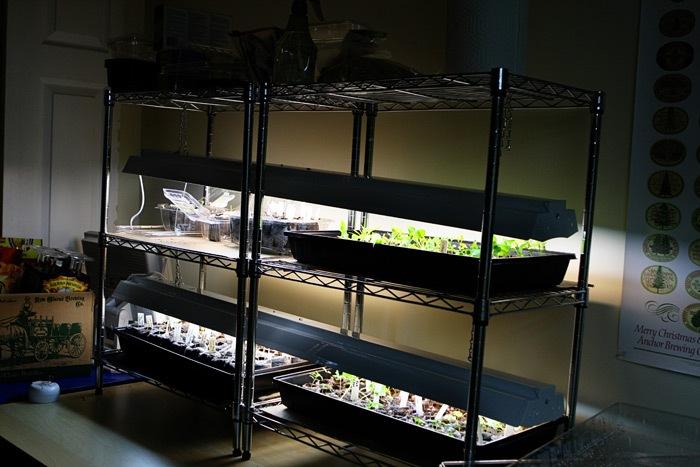 _web-2011-03-18-Seedlings-034-2