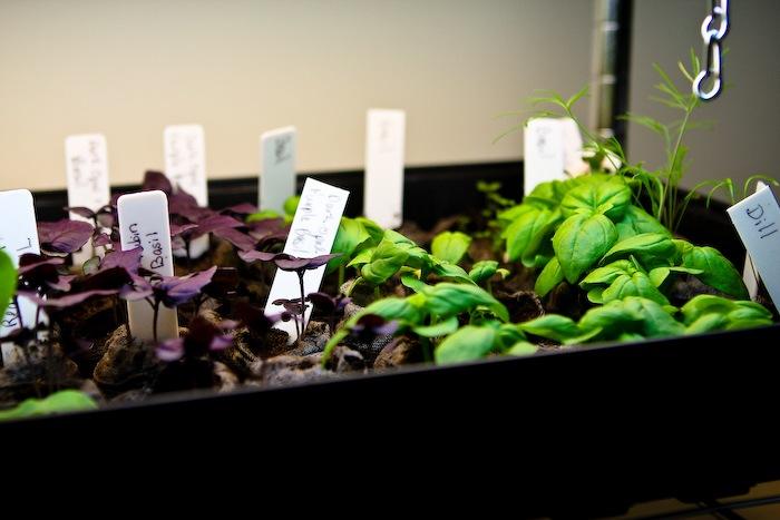 2011-03-30-SaladBox-16