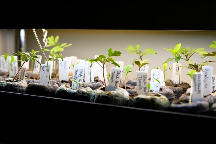 2011-03-30-SaladBox-17