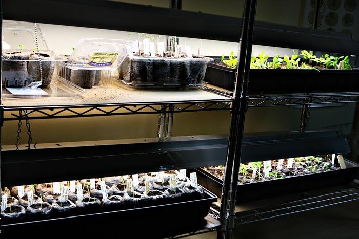 _web-2011-03-18-Seedlings-028