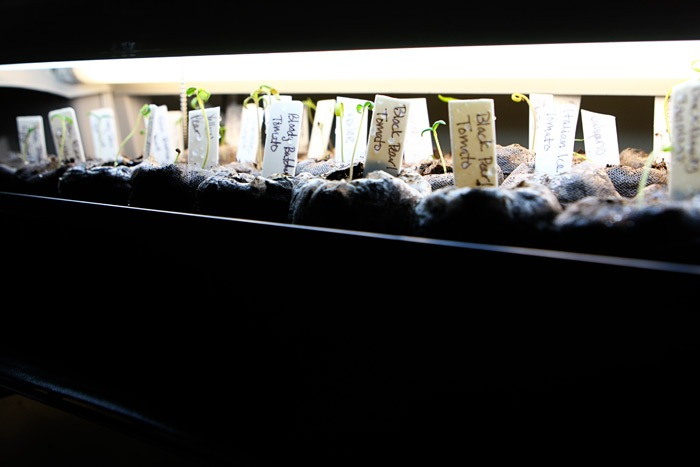 _web-2011-03-18-Seedlings-031