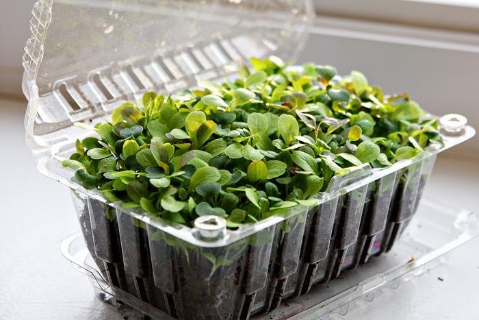 _web-2011-03-18-Seedlings-012