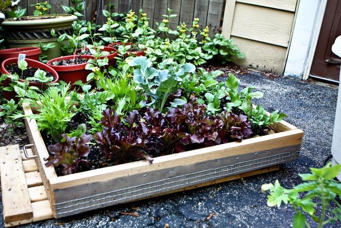 2011-05-13-SaladBox-4