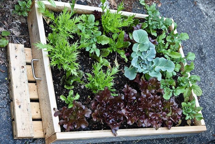 2011-05-13-SaladBox-1