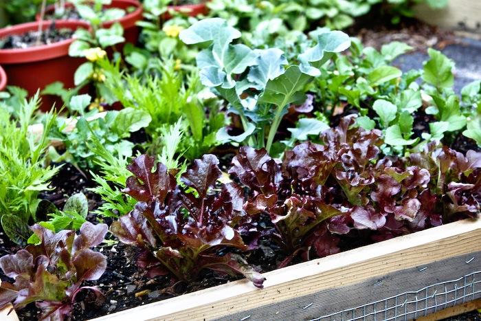 2011-05-13-SaladBox-5