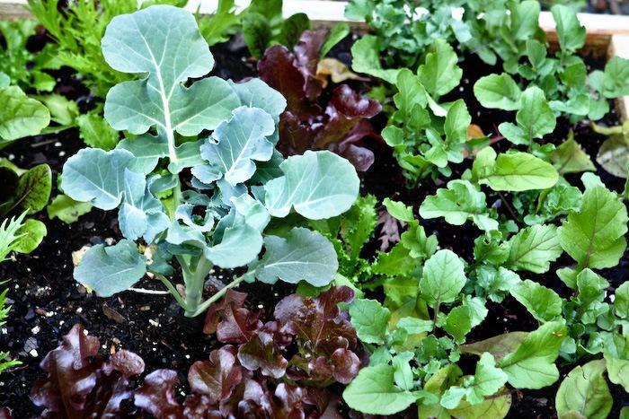 2011-05-13-SaladBox-2
