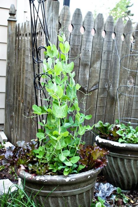 2011-05-13-SaladBox-3