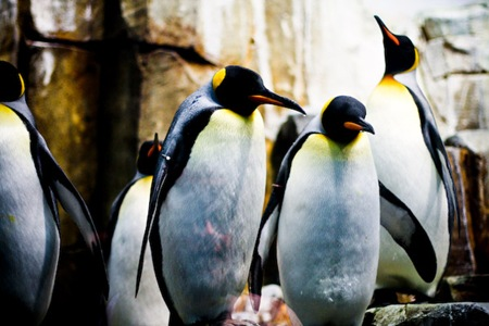 Montreal Biodome Penguins