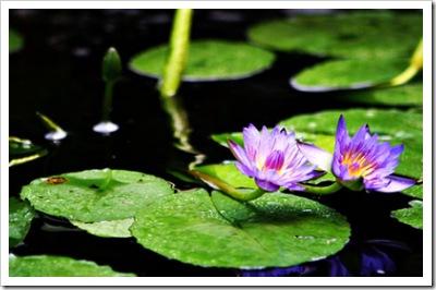 _web-2007-07-07 Niki In The Garden 020 copy