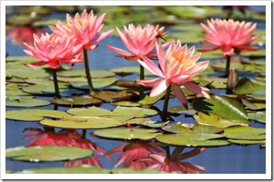 _web-2007-07-07 Niki In The Garden 172 copy