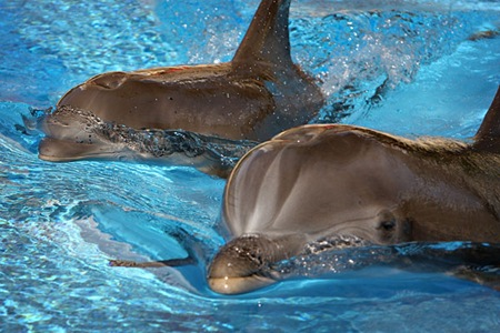 Mirage dolphins mother and baby