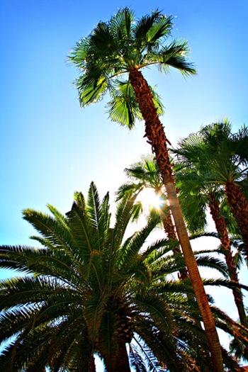 _web-2007-09-07-Vegas 262