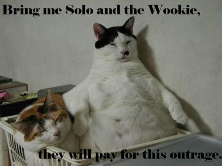 Solowookie