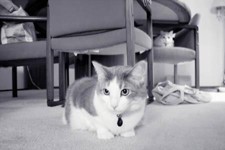 Meowmers1