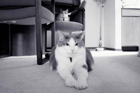 Meowmers2