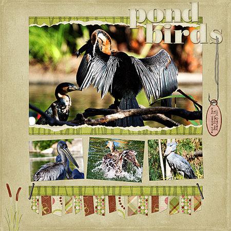 Pondbirds
