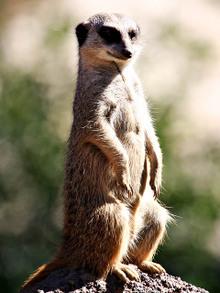 Web20070224_wild_animal_park_0462